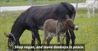 Organización denuncia maltrato a burros en China