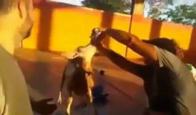 VIDEO: Docentes robaron una cabra, la emborracharon y maltrataron