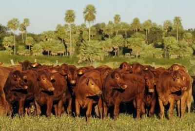 Lluvias registradas en la semana no son suficientes según ganaderos