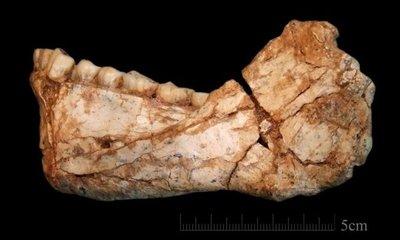 Fósiles de Yebel Irhoud cambiaron el relato sobre el origen humano