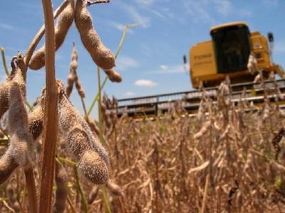 Turquía y Rusia se consolidan como nuevos mercados para la soja