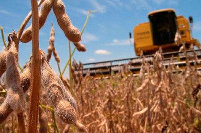 Lluvias retrasan la cosecha de soja, pero sin causar perjuicios