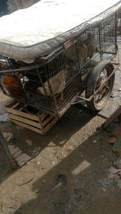 GALERÍA: Mudanza con gallinero portátil en el barrio Santa Ana, ante el avance del río