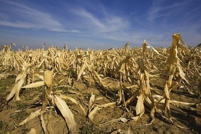Agricultores deben realizar plan de siembras ante amenaza de sequía