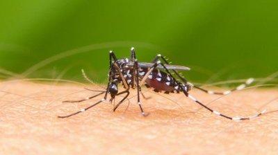 Salud confirma más de 800 casos de dengue este año