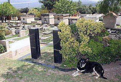 Murió el perro que visitó 11 años la tumba de su dueño