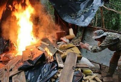 Destruyen más de 500 tn. de marihuana en Canindeyú: US$ 15 millones de pérdida para narcos