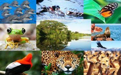 Revelarán extinción masiva de especies