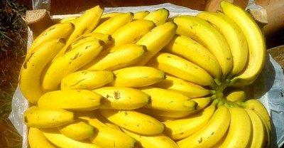 Bananeros exportan 15 cargas a la semana al mercado argentino