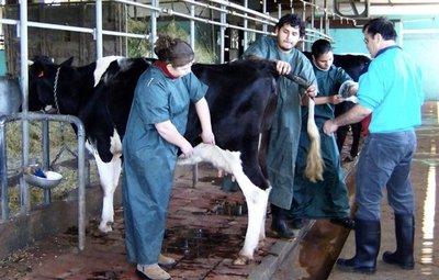 Declive académico de Veterinaria UNA pone en riesgo la ganadería