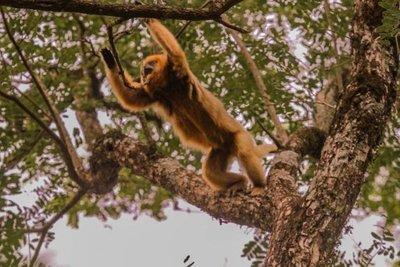 La plaza de los monos, un pintoresco paraje en Misiones
