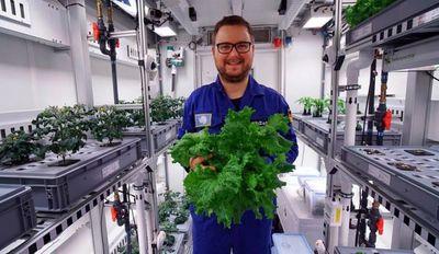 Científicos logran primera cosecha de vegetales en la Antártida