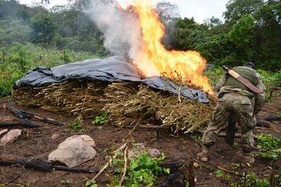 865 toneladas de marihuana en Amambay sacadas de circulacíon en Amambay