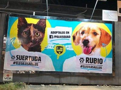 Candidatos se convierten en perros y gatos en Asunción