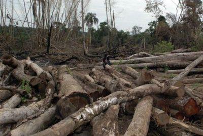 Nuestro Chaco podría convertirse en un desierto si continúan talando árboles