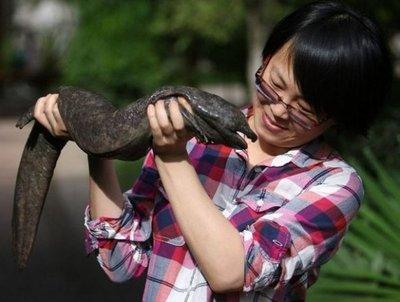 Las salamandras gigantes, en peligro de extinción