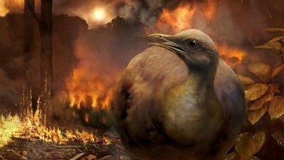 Aves terrestres superaron la extinción de los dinosaurios