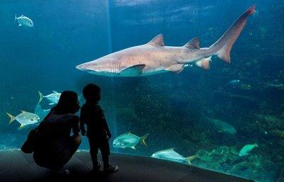 Tiburón mató a bañista en Recife