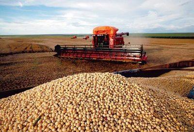 Gran pérdida con la soja de zafriña en Argentina, en Paraguay no