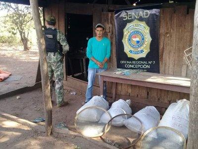 Intervienen depósito de marihuana en Yby Yaú