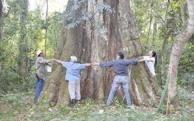 Competencia de árboles añosos  está en marcha