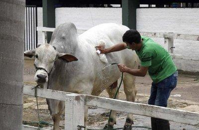Lo mejor de la ganadería nacional