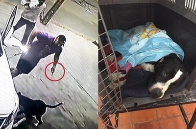 Apuñaló a un pitbull por ladrar a sus mascotas