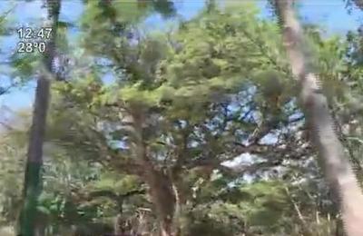 Inauguraron el Parque Urbano de Asunción