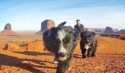 Perros abandonados en pleno desierto