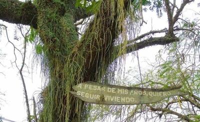 """HOY / Más de 500 árboles postulados para convertirse en """"Colosos de la tierra"""""""