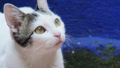 Insuficiencia renal en los felinos