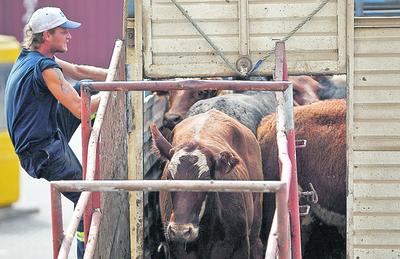 El mercado del ganado gordo está con precios firme