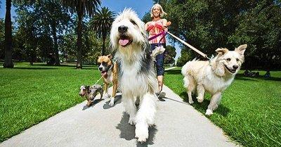 Cómo ser tu propio jefe ganando dinero por pasear perros