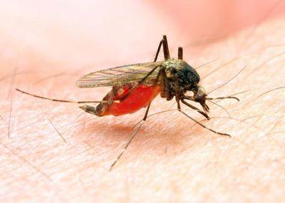 Sin casos confirmados de dengue en la última semana, informó Salud