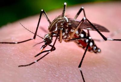 Descartan posible caso de chikungunya en Ayolas