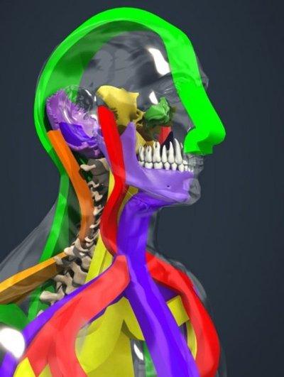 Dolor y desequilibrio postural