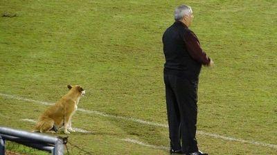 Una perra, ayudante de CJS