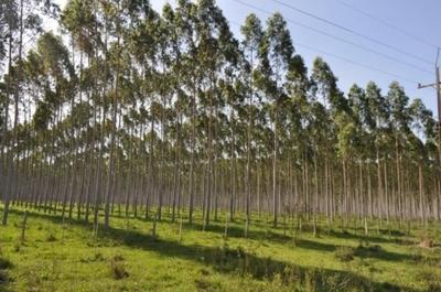 Promueven la reforestación como negocio rentable en Concepción