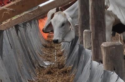 El precio del ganado sigue presionado a la baja