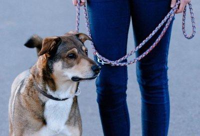 Correa puede dañar tráquea y laringe del perro
