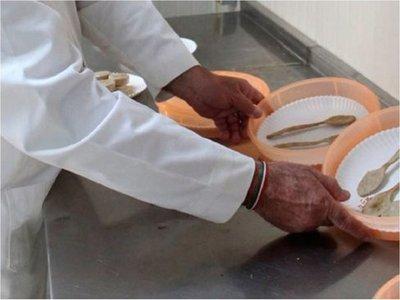 Científicos crean cubiertos comestibles altamente nutritivos