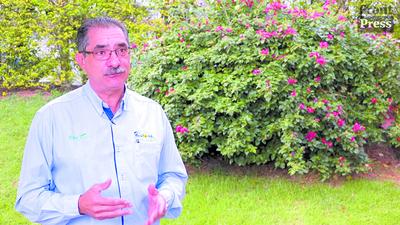 Alto Paraná: siembra de soja en su etapa final