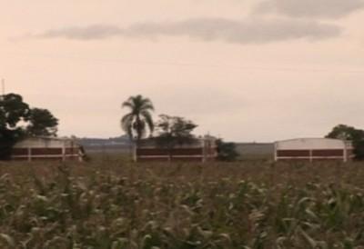 Última Función De Paraguay Droga Y Banana