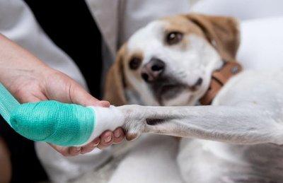 Cómo asistir a la mascota en una situación de emergencia