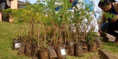 Siembran 20 mil plantines para reforestación
