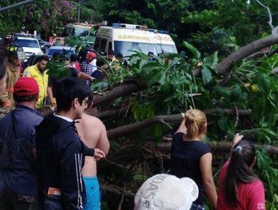 Un feroz árbol cayó sobre tres estudiantes anga