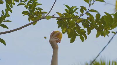 Crearán un mapa para conocer todos los árboles y frutas que tiene Asunción