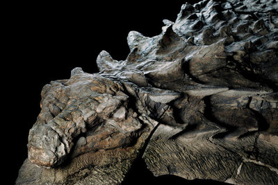 El fósil de dinosaurio mejor preservado ve la luz en Canadá