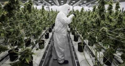 Canadá legaliza la marihuana