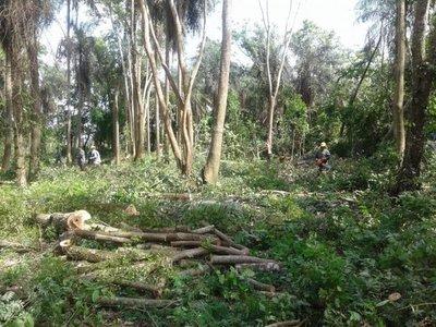 Denuncian que funcionarios de Ande talan bosque de la zona de Horqueta
